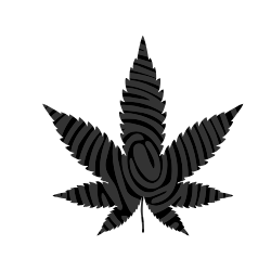 Insufficient Age Verification Could Derail the Cannabis Industry - Insights